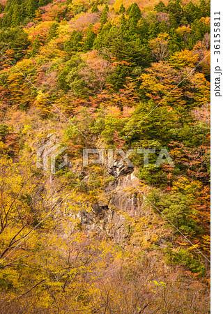 渓谷の風景、晩秋の山。 36155811