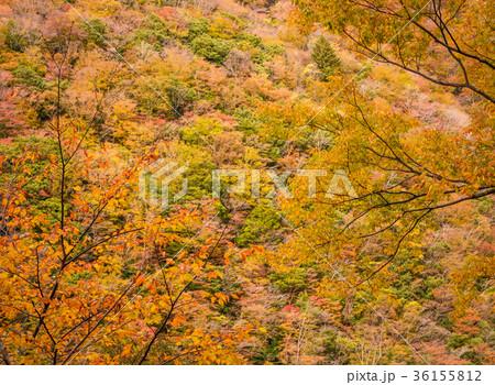 渓谷の風景、晩秋の山。 36155812