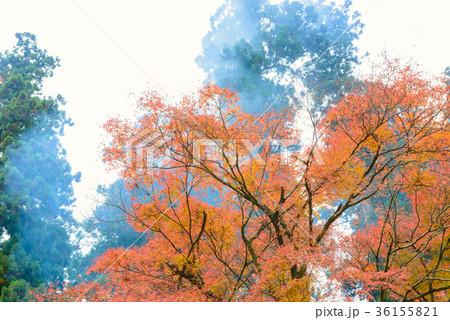 晩秋の森の木々 36155821
