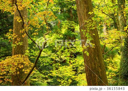 晩秋の森の木々 36155843