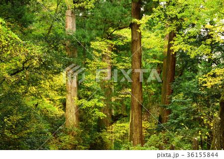 晩秋の森の木々 36155844