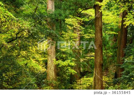 晩秋の森の木々 36155845