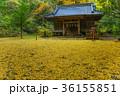 神社 紅葉 秋の写真 36155851