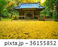 神社 紅葉 秋の写真 36155852