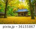 神社 紅葉 秋の写真 36155867