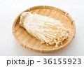 エノキ 36155923