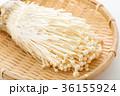 エノキ 36155924