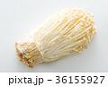 エノキ 36155927