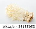 エノキ 36155953