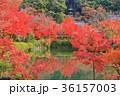 永観堂 多宝塔 紅葉の写真 36157003