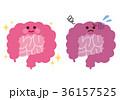 大腸 小腸 健康のイラスト 36157525