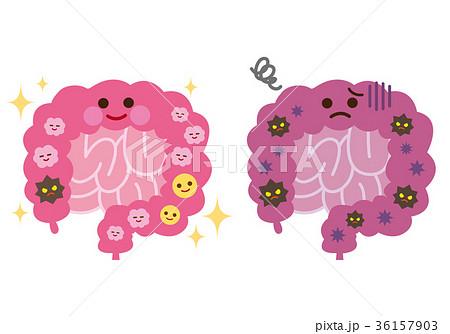健康な腸 不健康な腸 腸内菌 36157903