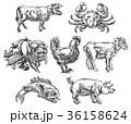 牛 ベクトル 動物のイラスト 36158624