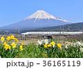 富士山 新幹線 鉄道の写真 36165119