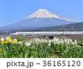 富士山 新幹線 鉄道の写真 36165120