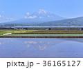 風景 富士山 新幹線の写真 36165127