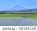 風景 富士山 新幹線の写真 36165128