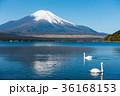 富士山 逆さ富士 青空の写真 36168153