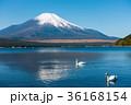 富士山 逆さ富士 青空の写真 36168154