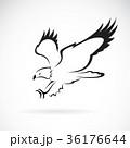 イーグル ワシ 鷲のイラスト 36176644