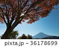 富士山 紅葉 風景の写真 36178699