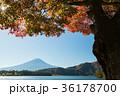 富士山 紅葉 風景の写真 36178700