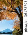 富士山 紅葉 河口湖の写真 36178703
