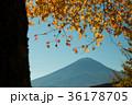 富士山 紅葉 風景の写真 36178705