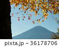 富士山 紅葉 風景の写真 36178706