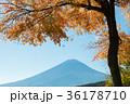 富士山 紅葉 秋の写真 36178710