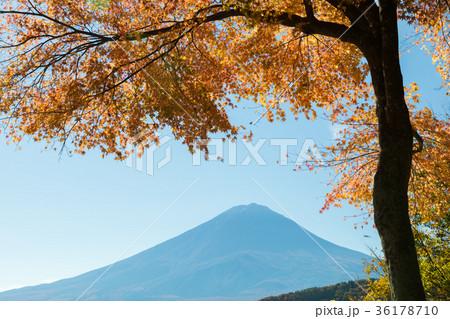 富士山 紅葉 河口湖 36178710