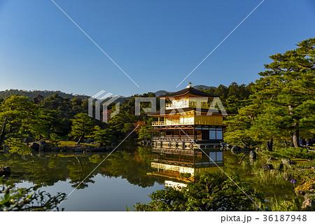 京都 西日を浴びてピカピカに輝く秋の金閣寺 36187948
