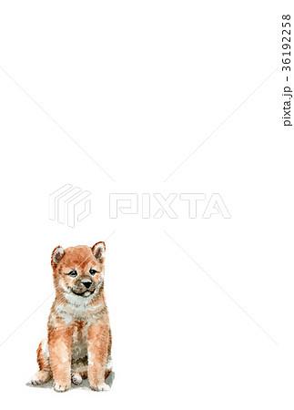 犬の年賀ハガキ素材茶柴犬タテ型 36192258