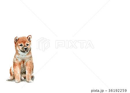 犬の年賀ハガキ素材柴犬ヨコ」型 36192259