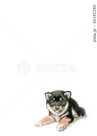犬の年賀ハガキ素材黒柴犬タテ型 36192260