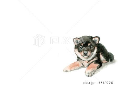 犬の年賀ハガキ素材黒柴犬ヨコ型 36192261