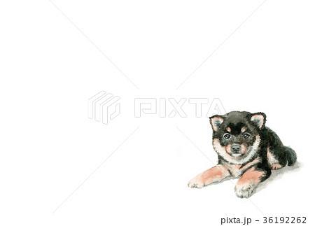 犬の年賀ハガキ素材黒柴犬ヨコ型 36192262