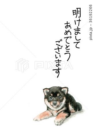 犬の賀詞入り年賀ハガキ素材黒柴犬タテ型 36192266