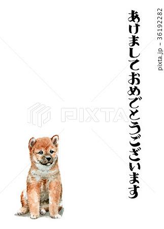 犬の賀詞入り年賀ハガキ素材柴犬タテ型 36192282