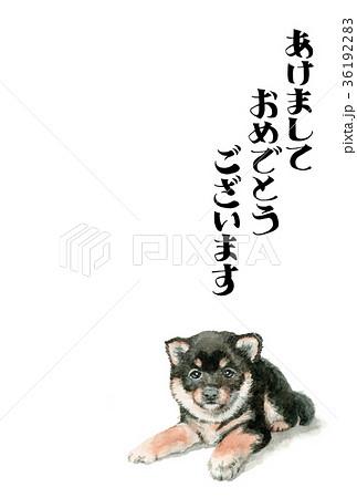 犬の賀詞入り年賀ハガキ素材黒柴犬タテ型 36192283