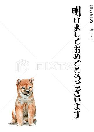 犬の賀詞入り年賀ハガキ素材柴犬タテ型 36192284