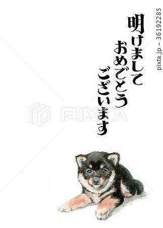 犬の賀詞入り年賀ハガキ素材黒柴犬タテ型 36192285