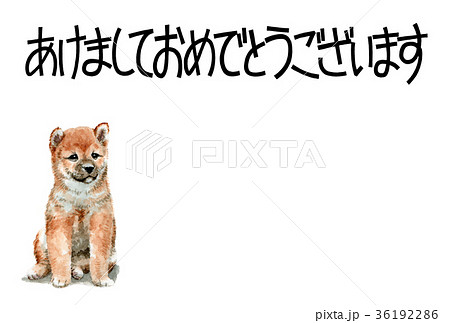 犬の賀詞入り年賀ハガキ素材柴犬ヨコ型 36192286