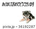 年賀状 ハガキ 犬のイラスト 36192287