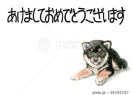 犬の賀詞入り年賀ハガキ素材黒柴犬ヨコ型 36192287