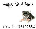 年賀状 ハガキ 犬のイラスト 36192338