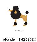 プードル わんこ 犬のイラスト 36201088