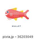 サカナ 魚 魚類のイラスト 36203049
