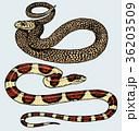 ヘビ 蛇 ベクトルのイラスト 36203509