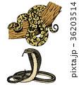 ヘビ 蛇 ベクトルのイラスト 36203514